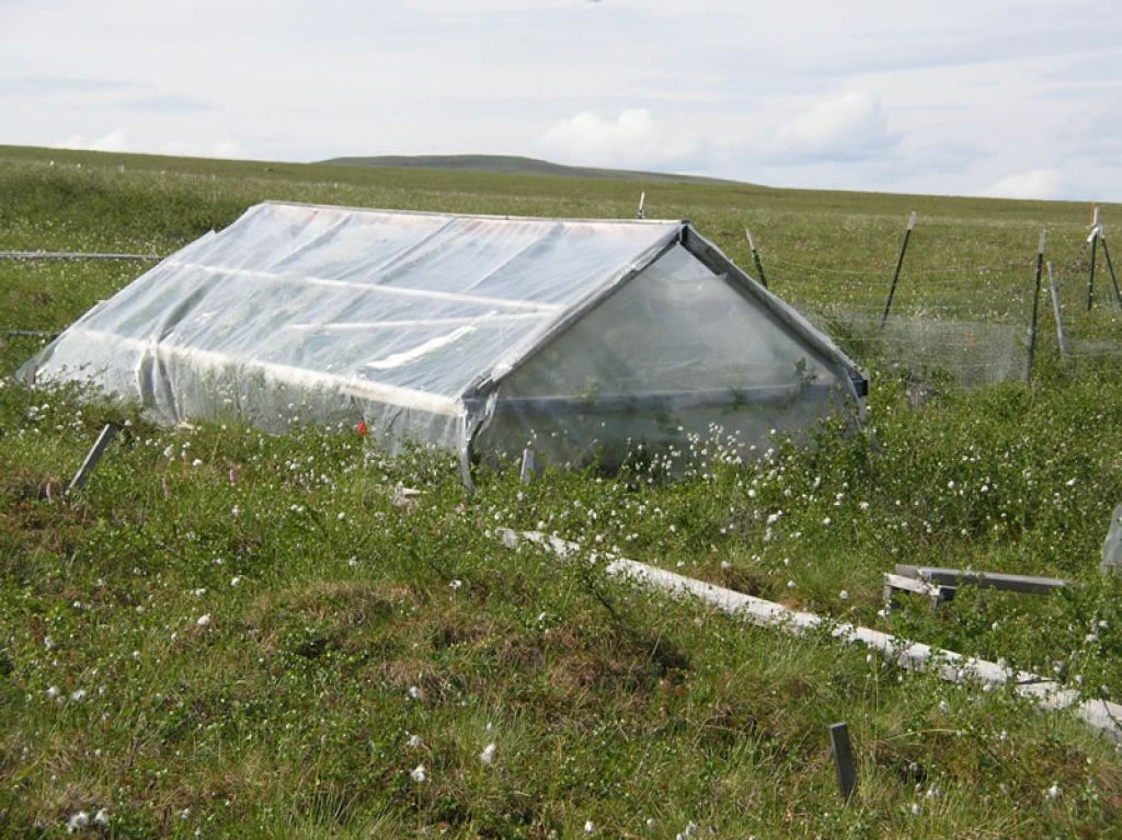 View of a plot of tundra studied under the Toolik Lake research project.  - © SEETA SISTLA, UC IRVINE