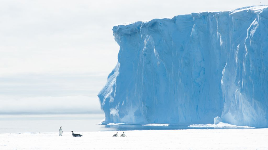 Penguins frolic at the seaward edge of the King Baudouin Ice Shelf - © International Polar Foundation