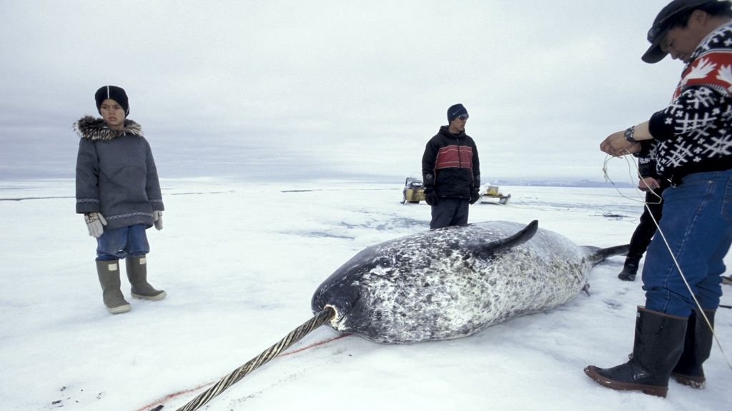 Narwhal hunters, Baffin Island - © Rémy Marion