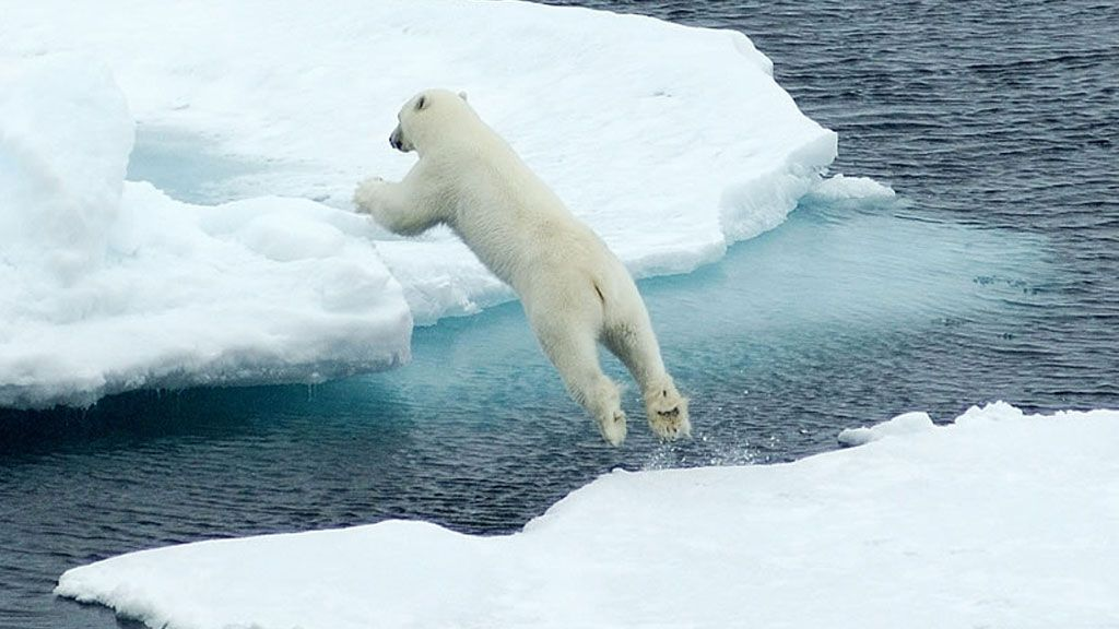 Polar bear making its way across the Arctic sea ice floe - © MARTIN JAKOBSSON