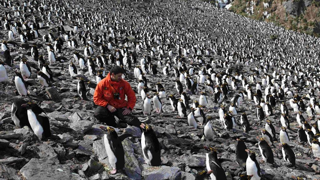 Dr Xavier studying a Macaroni penguin colony